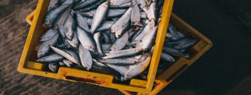 seafood intolerance