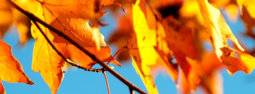 Prepare for Autumn with food sensitivity testing