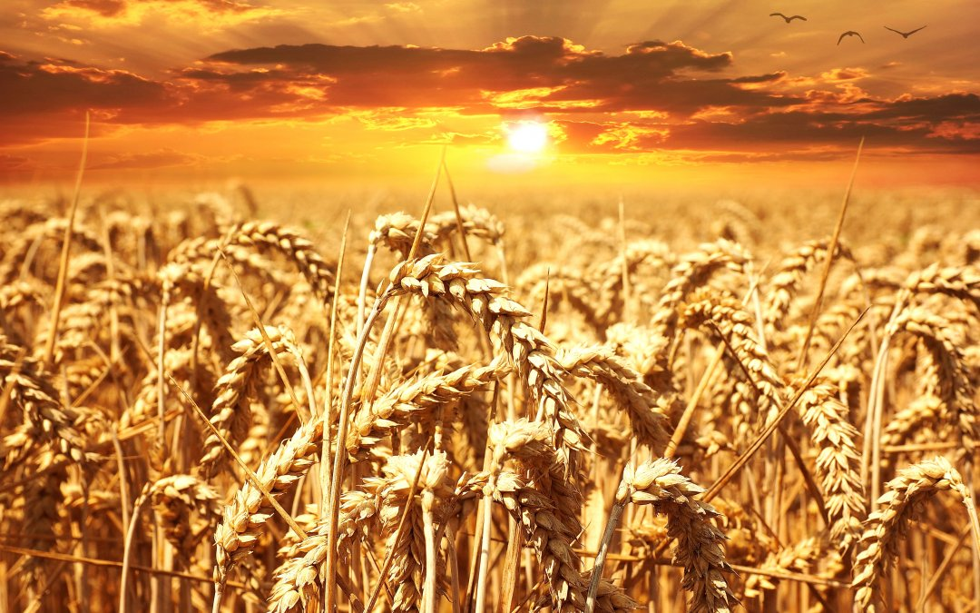 Do You Have a Wheat Intolerance?