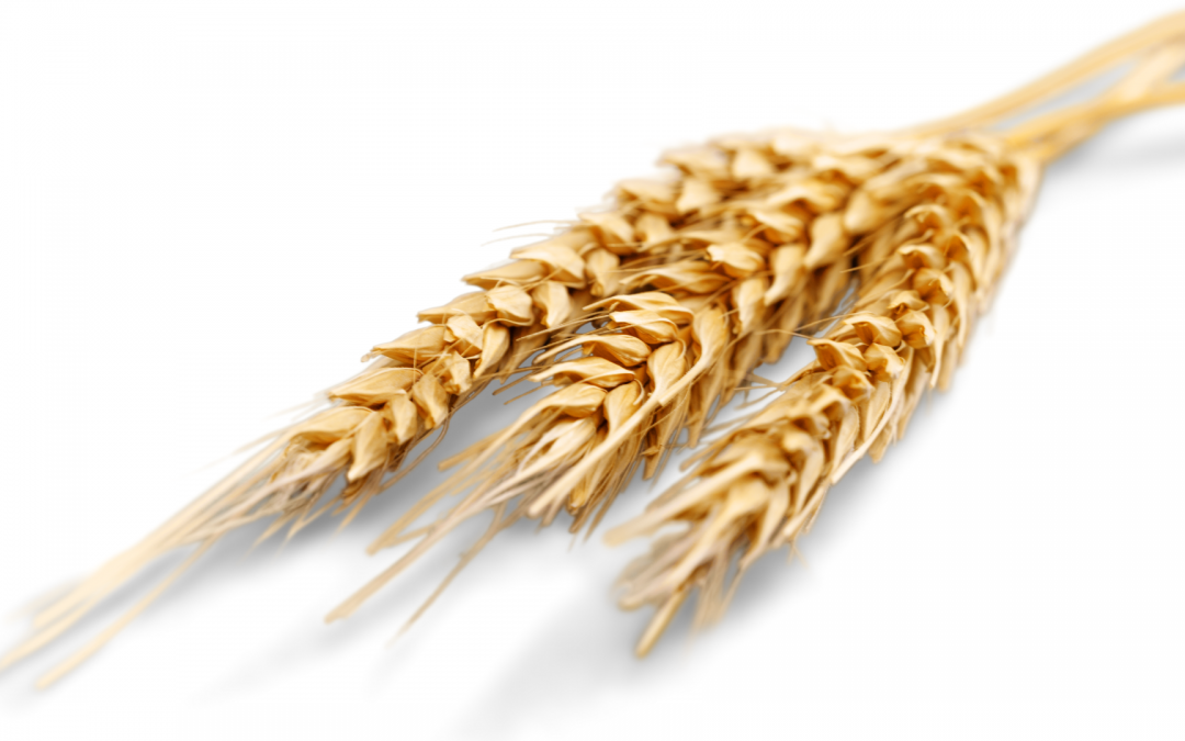 Tips for Starting a Wheat Allergy Diet